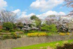 昭和Kinen KoenShowa纪念公园,立川市,东京, 4月13,2017的日本:樱桃树和五颜六色的花沿干燥罐头 免版税图库摄影