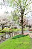 昭和Kinen KoenShowa纪念公园,立川市,东京, 4月13,2017的日本:美丽的郁金香庭院在春天 免版税库存图片