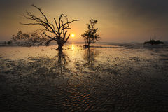 树和日落剪影在沈默海滩的 库存照片