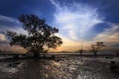 树和日落剪影在沈默海滩的 库存图片