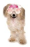 是中国有顶饰粉扑佩带的新娘玻璃 图库摄影