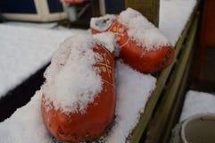 是在我的庭院里和与雪的事 免版税图库摄影