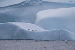 是大的冰山企鹅的操场在南极洲 免版税库存照片