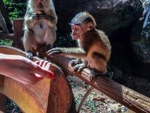 是小的猴子手联邦机关 库存照片