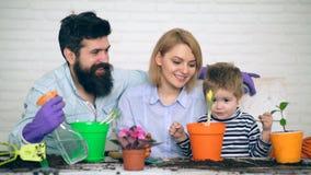 是愉快花费时间种植花的家庭在夏天 花匠一点 幼木的概念