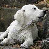 是有小狗水湿yust 免版税图库摄影
