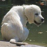 是有小狗水湿yust 库存图片