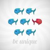 是独特的概念,蓝色红色鱼,被隔绝 免版税库存照片