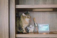 是的猫变冷,放松和自然的在屋子里 舒适和保险柜有软的焦点的 库存图片