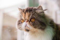是的猫变冷,放松和自然的在屋子里 舒适和保险柜有软的焦点的 图库摄影