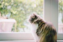 是的猫变冷,放松和自然的在屋子里 舒适和保险柜有软的焦点的 库存照片
