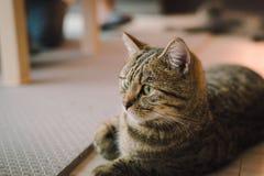 是的猫变冷,放松和自然的在屋子里 舒适和保险柜有软的焦点的 免版税库存图片