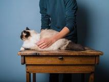 是的猫在木书桌上的examind 免版税库存照片