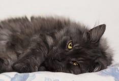是的猫舒适的 图库摄影