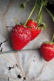 是腐烂的草莓 图库摄影