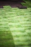 是草坪新的传播 免版税库存图片