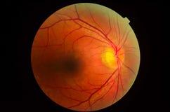 显微镜的眼睛 库存图片