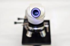 显微镜盯镜 库存图片