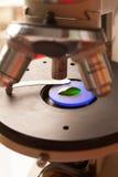 显微镜玻璃 免版税库存照片
