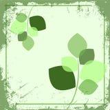 显微镜leaf4 库存照片