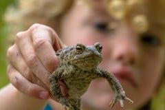 显示一只共同的蟾蜍的孩子 免版税库存照片