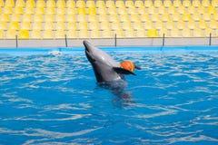 显示与海豚在Dolphinarium 库存照片