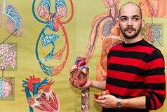 显示人的心脏模型的生物老师 免版税库存照片