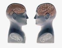 显示人脑的两个颅相学头面对在白色背景 免版税库存照片