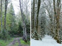 显示冬天和春天的双折的画在森林地 免版税库存图片
