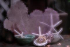 显示古色古香的德国玩偶头的乡情系列围拢由海壳、海星和珊瑚 免版税库存图片