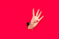 显示四个手指的妇女 库存照片