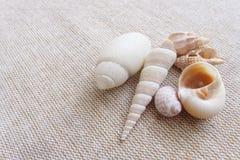 在亚麻制背景静物画的贝壳 免版税库存照片