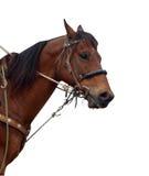 显示大头钉的接近的牛仔小马s  免版税库存照片