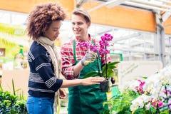 显示对顾客一朵盆的桃红色兰花待售的快乐的供营商 免版税图库摄影