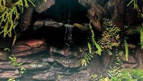 显示小滴水的微型瀑布在巴厘岛,印度尼西亚 免版税库存图片