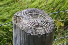 显示成长的一个老和被风化的农业篱芭岗位的上面由哪些盘旋树` s年龄可以是坚定的 免版税库存照片