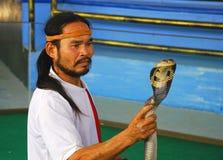 显示有毒的蛇 免版税库存照片