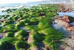 显示海浪草的低潮在克力街,拉古纳海滩,加利福尼亚 免版税库存照片