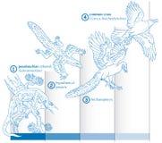 显示演变的爬行动物怎样的图表被变换了成鸟 向量例证