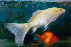 显示的鱼 图库摄影