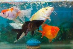 显示的鱼 免版税库存图片