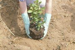 显示种植的人一棵树在世界地球日 免版税库存图片