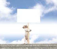 显示空白广告牌的愉快的狗 图库摄影