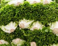 显示绿色散叶莴苣 免版税库存图片