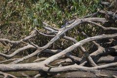 显示自然流程的` s样式木头 图库摄影
