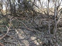 显示荒芜的被缠结的木分支 免版税图库摄影
