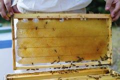 显示蜂箱的蜂农 图库摄影