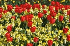 显示詹姆斯・伦敦公园红色st郁金香 免版税库存照片