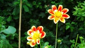显示颜色的花 库存照片
