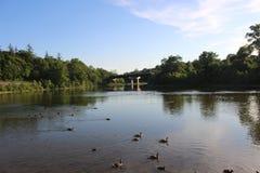 显示鹅和桥梁的一个加拿大湖的全景 库存图片